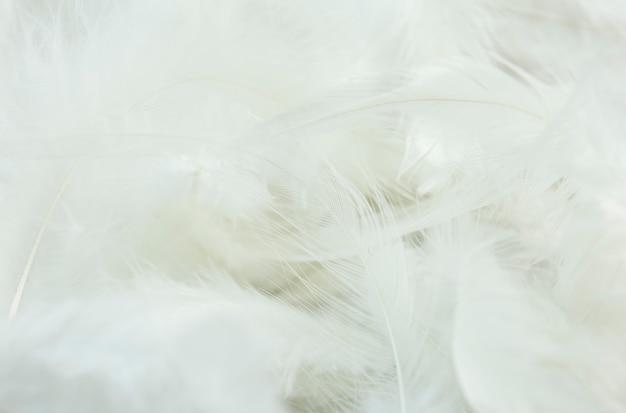 Białe piórko tło.
