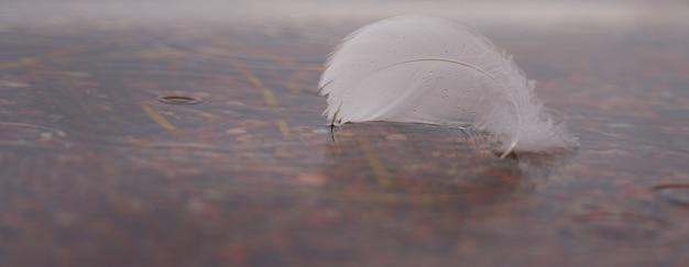 Białe pióro łabędzia w wodzie z miejscem na tekst