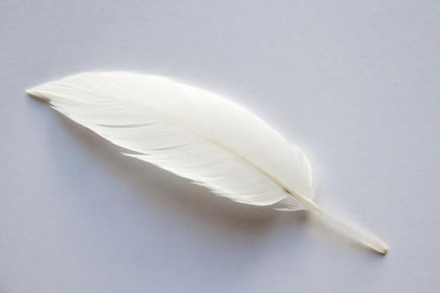 Białe pióro skrzydła ptaka na jasnym tle