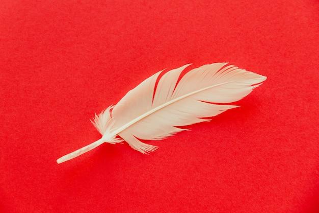 Białe pióro skrzydło ptaka na białym tle na czerwonym tle