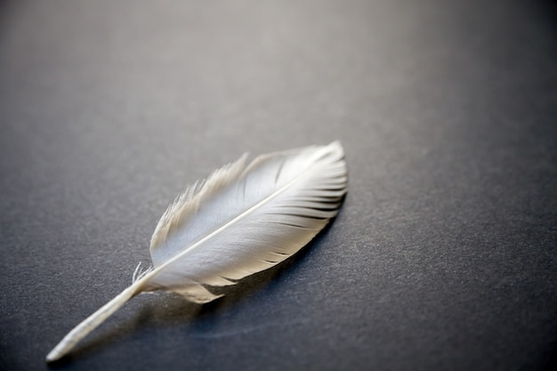 Białe pióro skrzydło ptaka spoczywające na ciemnym eleganckim tle