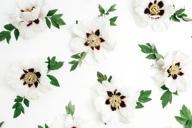 Białe piwonie kwiaty tekstury na białym tle. płaski układanie, widok z góry