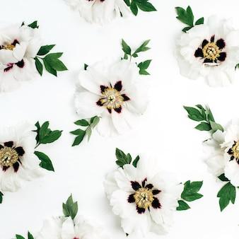 Białe piwonie wzór kwiaty na białym tle. płaski układanie, widok z góry