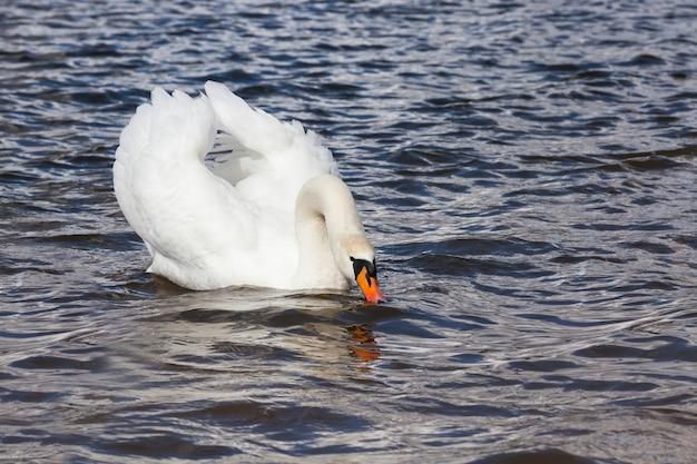 Białe ptactwo wodne