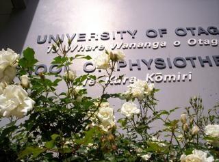 Białe róże instytucjonalnie w cieniu