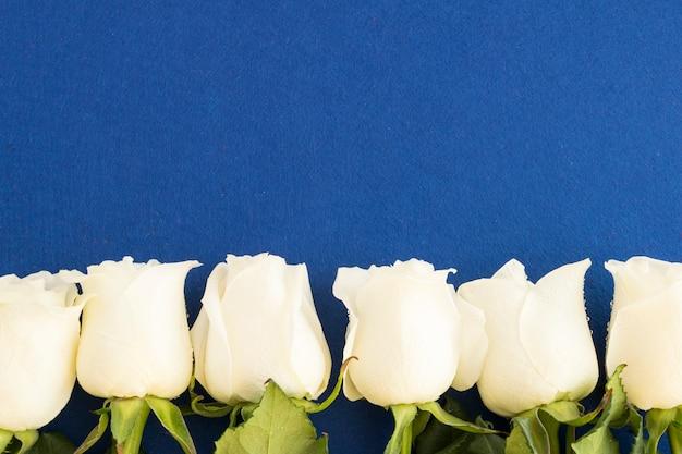 Białe róże na niebiesko