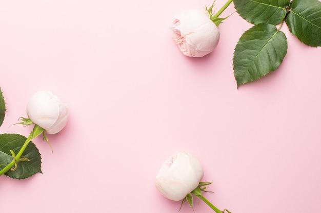 Białe róże na pastelowym różowym tle z lato. przedmiot na wakacje i miłość