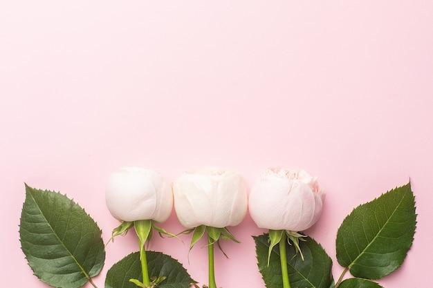 Białe róże na pastelowym różowym tle z lato