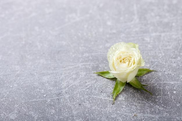 Białe róże na szarym tle świezi, mali kwiaty