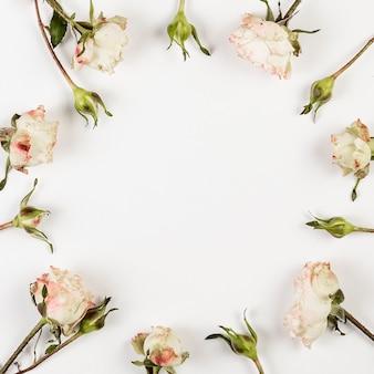 Białe róże pąki i miejsce