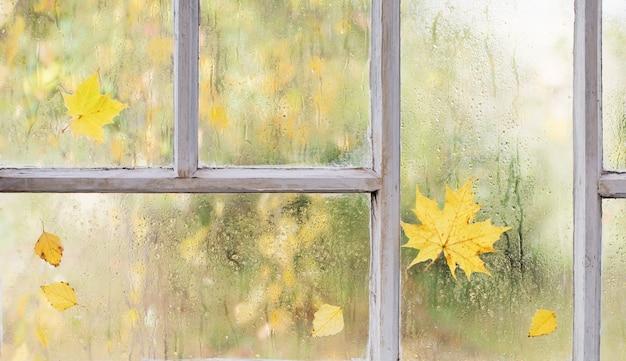 Białe stare drewniane okno z kroplami deszczu i jesiennymi liśćmi