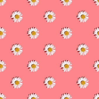 Białe stokrotki na różowym tle z twardymi cieniami