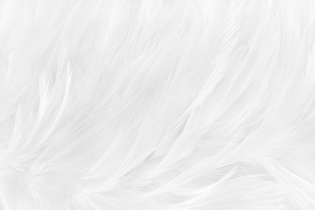Białe szare piórko wzór tekstury dla tła i dzieła sztuki projektowania.
