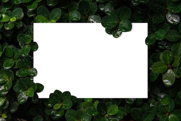 Białe tempo dla tekstu na tle świeżych zielonych liści, które właśnie pada