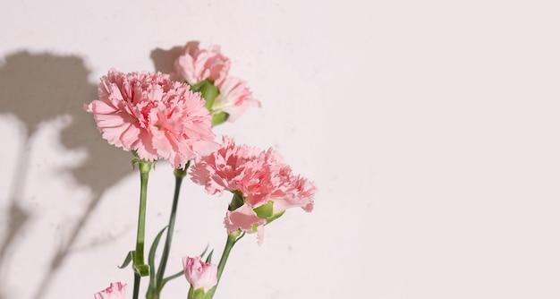 Białe tło z różowymi kwiatami goździków. skopiuj miejsce