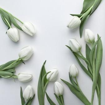 Białe tulipany na białym tle, flatlay z dużą ilością copyspace