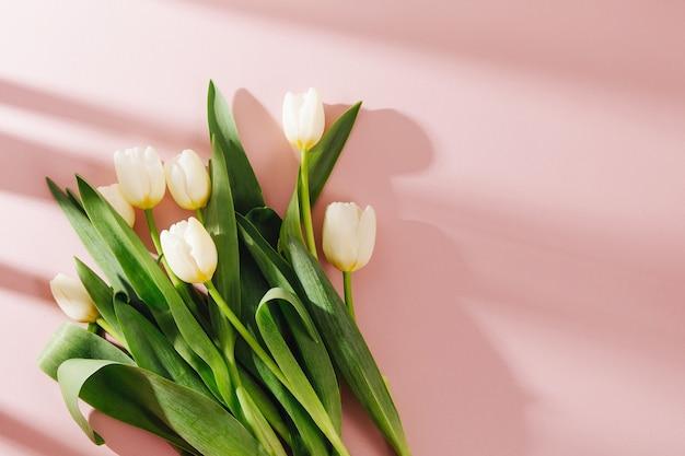 Białe tulipany na jasnoróżowym tle z porannym słońcem. stylowe kompozycje w pastelowych kolorach.
