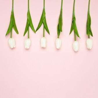 Białe tulipany wyrównane na stole