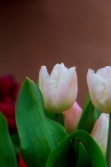 Białe tulipany z kroplami deszczu w świetle poranka.