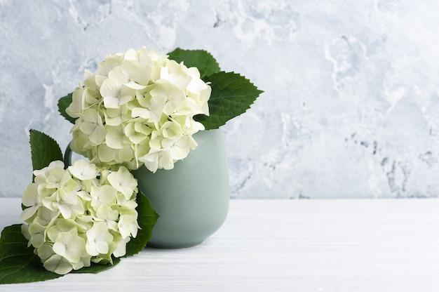 Białe, zielone kwiaty hortensji w doniczce