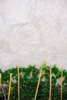 Białego cementu tło z rośliną