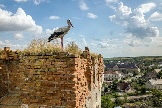 Białego i czarnego bociana ptasia pozycja na starym zniszczonym budynku w lecie.