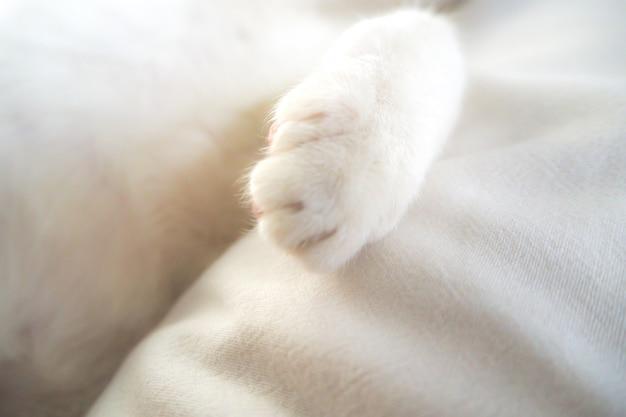 Białej kot łapy uroczy uroczy zwierzę domowe w łóżkowym miękkim czuciowym wakacyjnym pomysłu tle