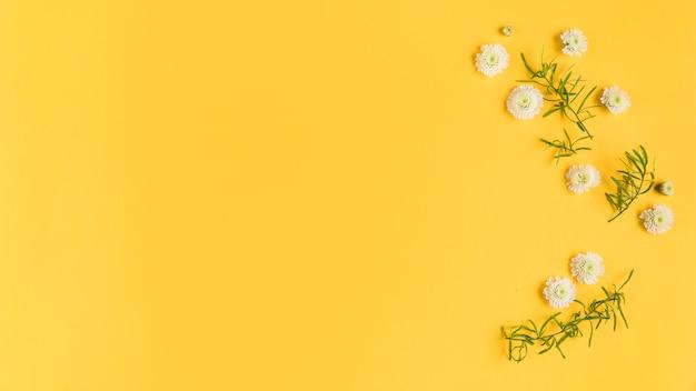 Biali chryzantema kwiaty, liście na żółtej kartce i