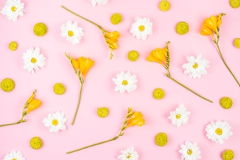 Biali i żółci kwiaty na różowym tle