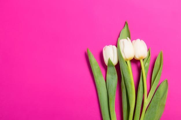 Biali tulipany kwitną z rzędu na purpurowym tle