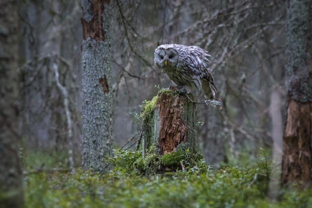 Biało-czarna sowa na pniu drzewa