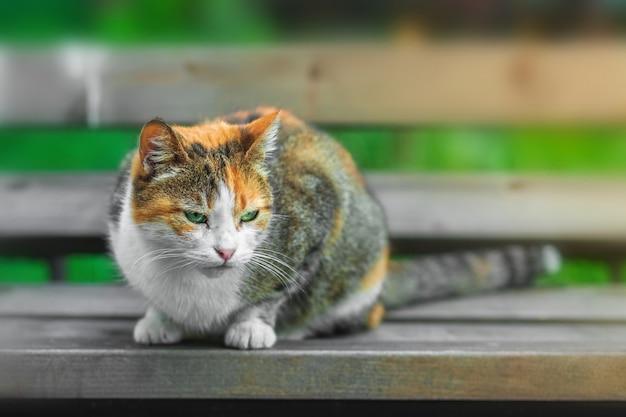 Biało-czerwony kot siedzi na ławce na tle zielonej trawy
