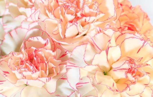 Biało-różowe kwiaty goździka (dianthus) nosegay część (wakacje na tle przyrody). zdjęcie kompozytowe o dużej głębi ostrości.