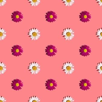 Biało-różowe stokrotki na różowym tle z twardymi cieniami