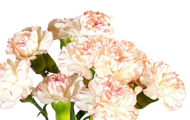 Biało różowy goździk (dianthus) kwiaty nosegay część na białym tle. zdjęcie kompozytowe o dużej głębi ostrości.