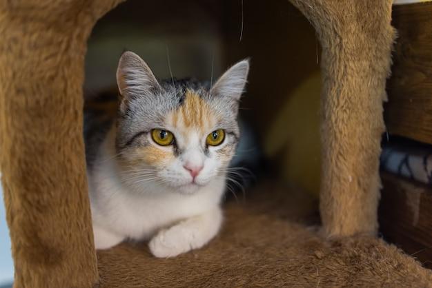 Biało-szary kot w domku dla kotów na podłodze patrząc w prawo
