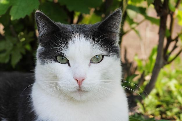 Biało-szary kot w trawie