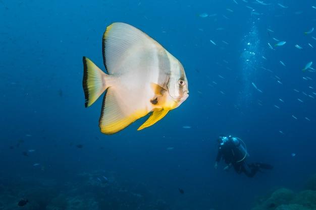 Biało-żółte ryby pływające