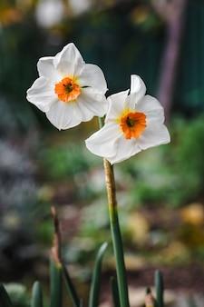 Biało-żółty Kwiatek W Soczewce Z Funkcją Tilt Shift Darmowe Zdjęcia