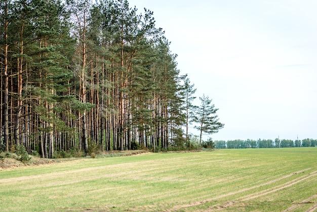 Białoruski krajobraz pole wiosny i las