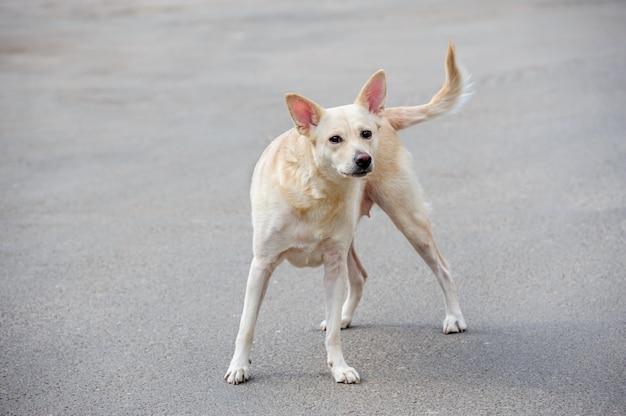 Biały bezpański pies