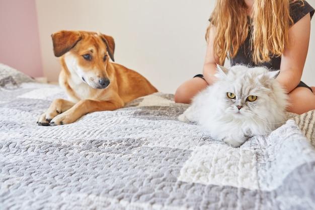 Biały brytyjski kot i duży rudy piesek siedzący na łóżku obok siebie.