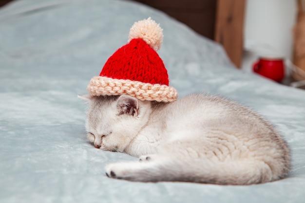 Biały brytyjski kotek śpi na szarym kocu w czerwonej czapce mikołaja z dzianiny.