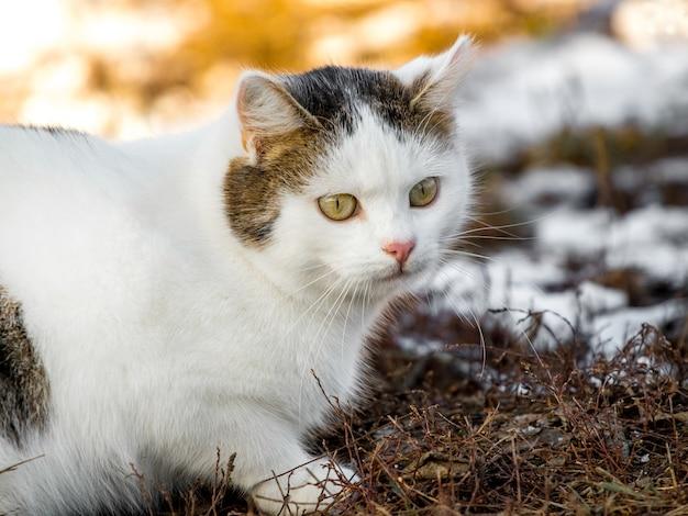 Biały cętkowany kot siedzi na ziemi podczas topnienia śniegu