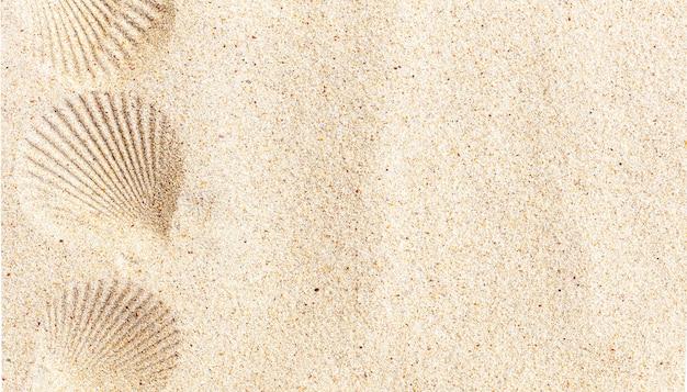 Biały czysty piasek z nadrukiem muszli, widok z góry, miejsce na kopię. koncepcja wakacji letnich.
