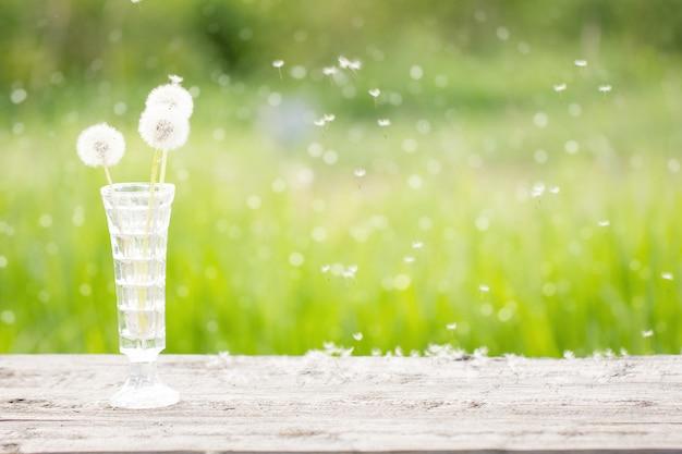 Biały dandelion w wazie na drewnianym stole, outdoors