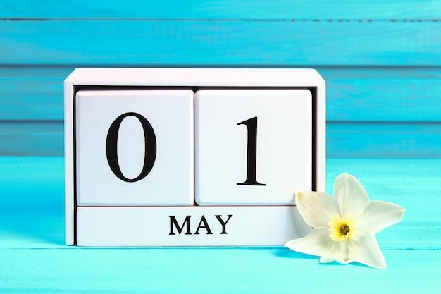 Biały drewniany kalendarz z tekstem: 1 maja. białe kwiaty żonkili na niebieskim drewnianym stole. dzień pracy