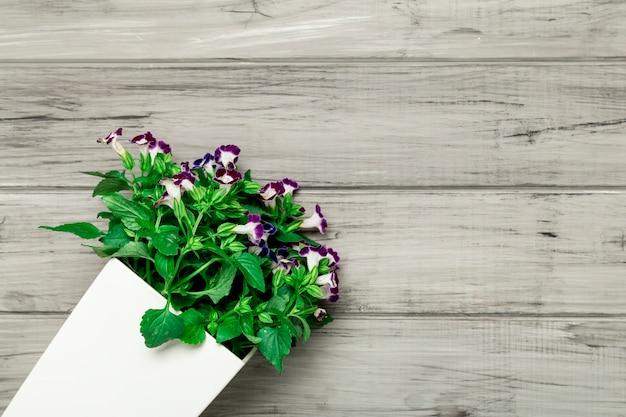 Biały garnek z pięknymi purpurowymi kwiatami