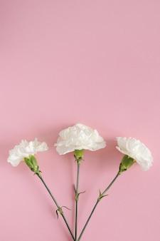 Biały goździk kwiat na różowym tle pastel. skopiuj miejsce. leżał płasko. widok z góry na koncepcję przyrody