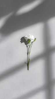 Biały goździk na szarej ścianie